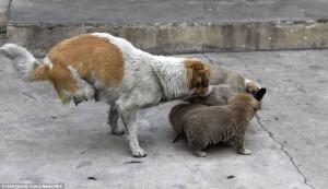 two-legged-dog4