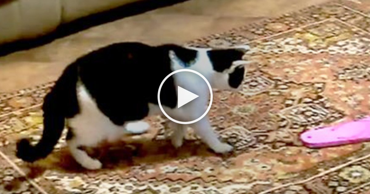 Cats Notice Flip Flops But How They React Will Leave You