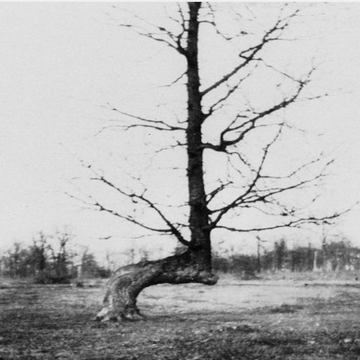 443px-Trail_Marker_Tree_located_on_the_border_of_Mettawa_and_West_Lake_Forest_IL