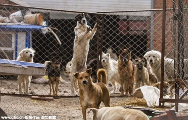 Purchase Dog Slaughterhouse And Set Up Shelter