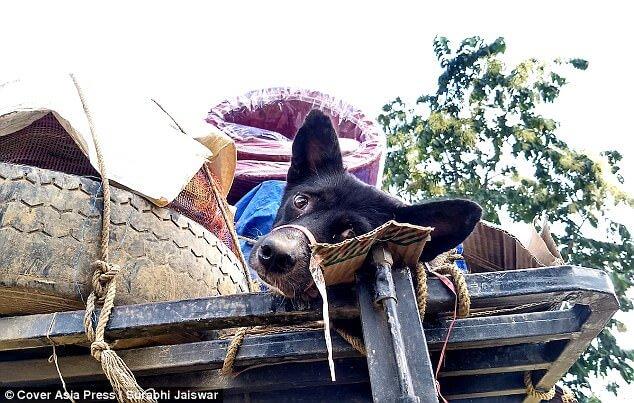 dog-meat-market-3