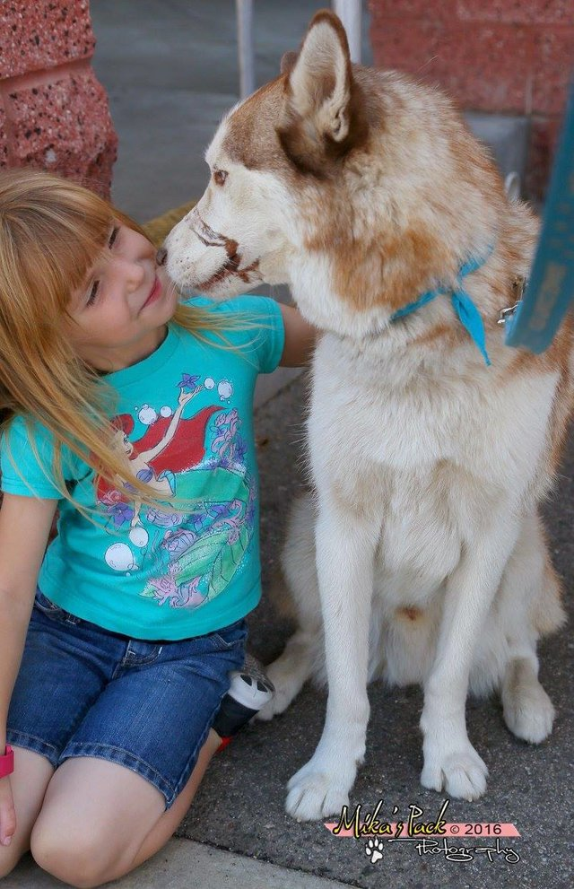 Therapy-dog-helps-abused-children
