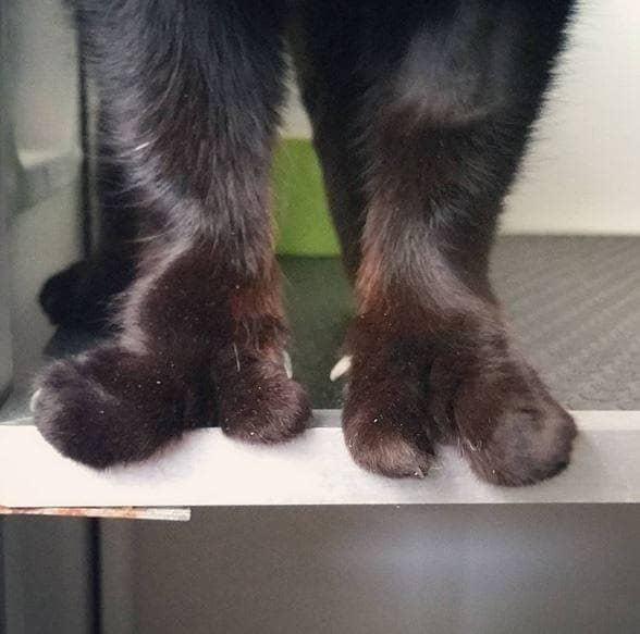cat-paws-4