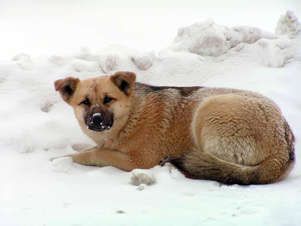 hund-kall22