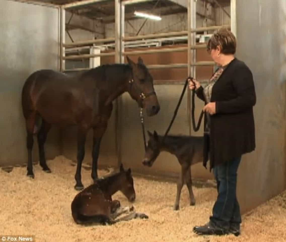 twin-horse-babies1