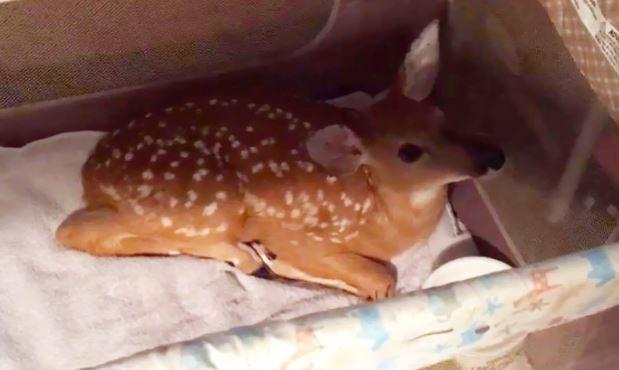 10-dog-saves-drowning-deer