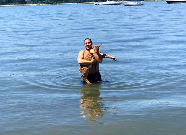 8-dog-saves-drowning-deer