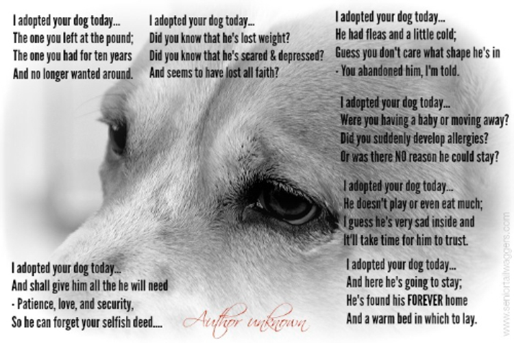 i_adopted_your_dog_today_poem