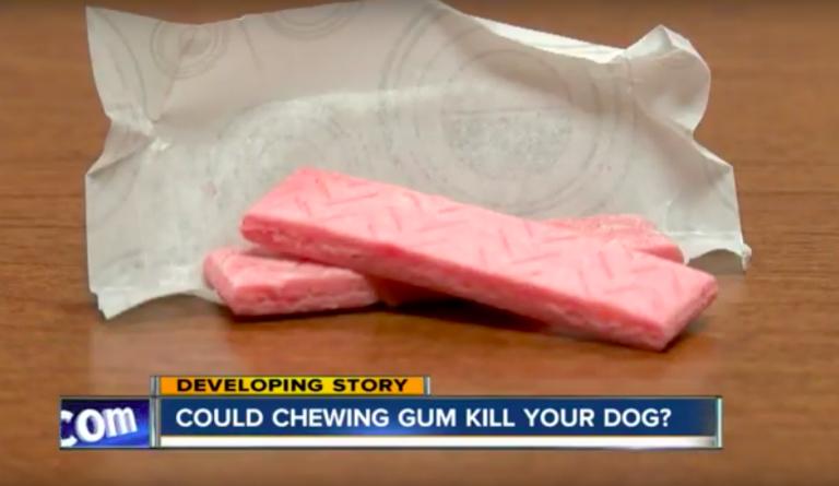 dog-gum-8