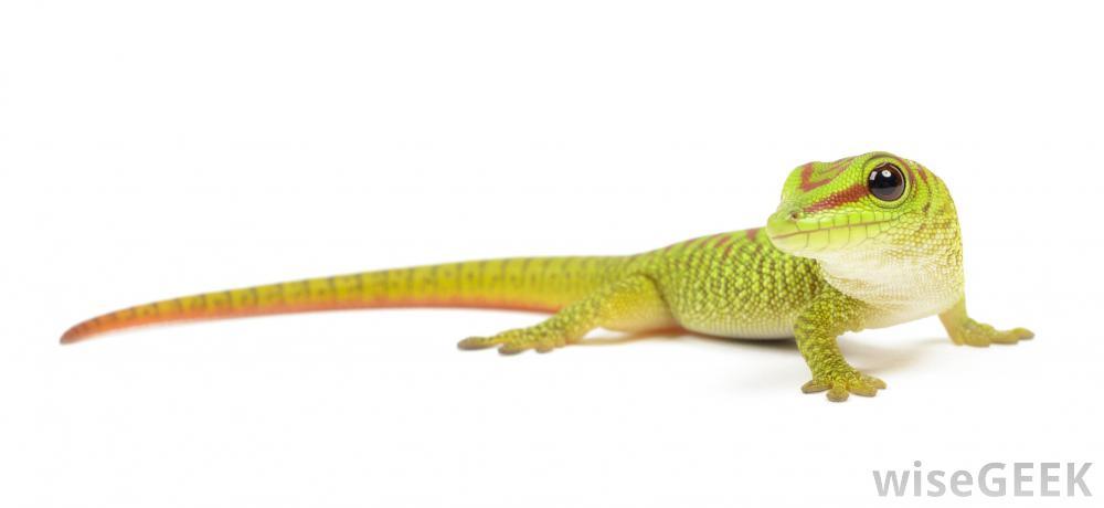 lizard_birth_story_11