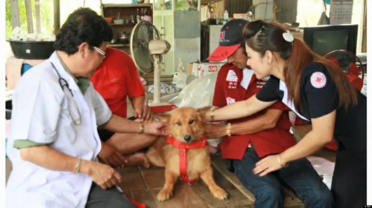 o-DOG-SAVES-NEWBORN-THAILAND-facebook