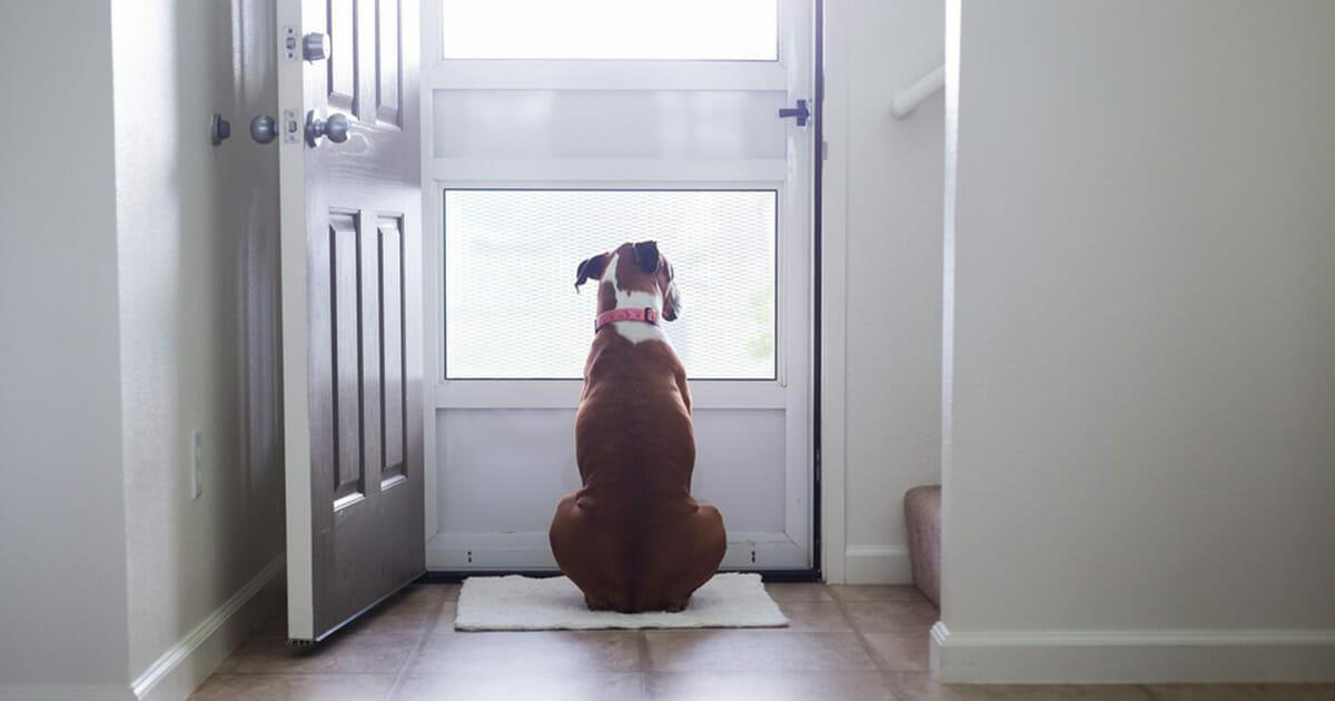 hundvantar1
