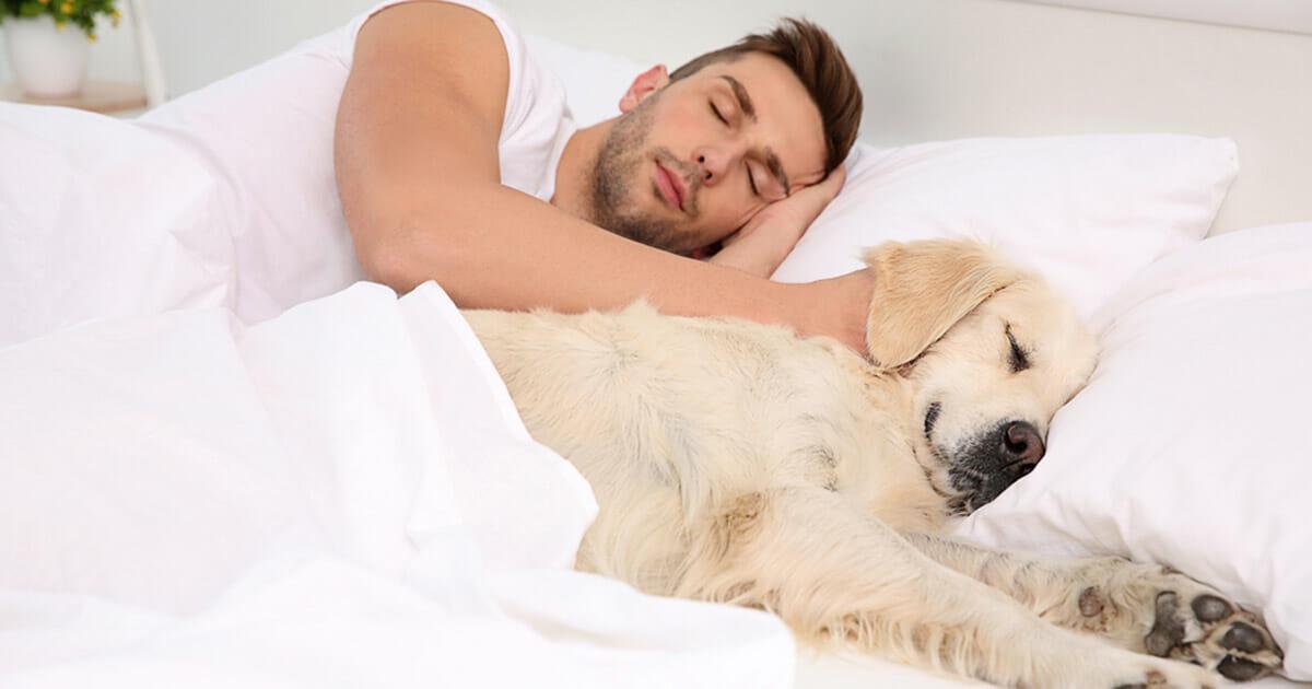 sovermedhund1