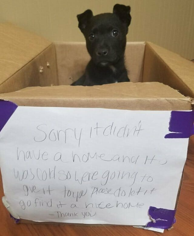 this-puppy-was-abandoned-outside-a-school-11