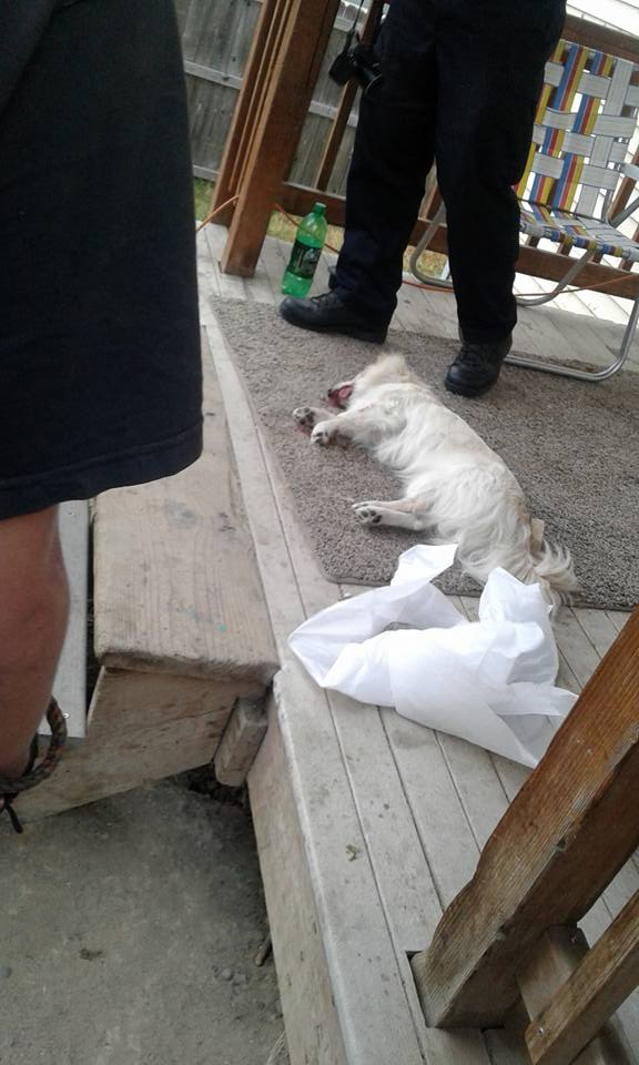 killing dog