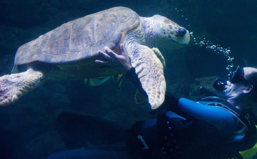 turtle rescue intern